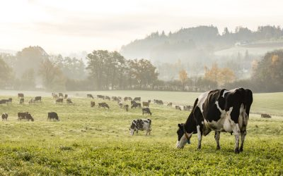 L'obbligo di indicazione di origine per il latte è compatibile con le norme UE: la sentenza Lactalis